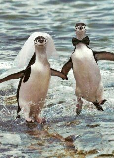 bahkan pinguin pun gandengan dan bahagia menikah! kalian kapan mblo?