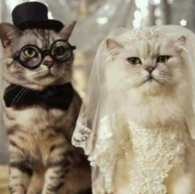duh elegan banget ya, pasangan kucing yang lucu ini,,