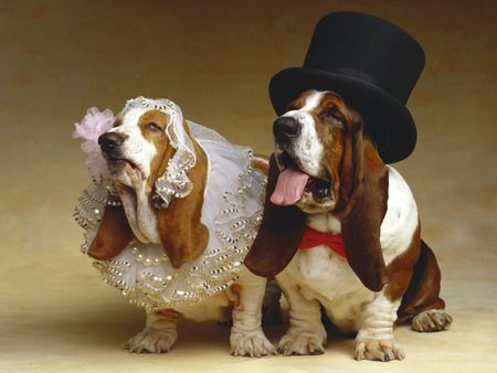 pasti sang pemiliknya nih yang udah gemes dan gak sabar pingin menikahkan anjingnya