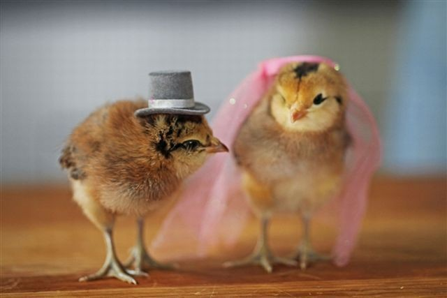 yak ampun... kecil-kecil udah nikah.. tapi tetep lucu yak