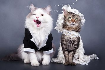 buat kalian yang punya hewan peliharaan yang jomblo, segeralah diadakan perjodohan!
