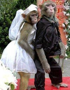 Mau Tahu Gimana Jadinya Kalo Hewan Mengadakan Pernikahan? Kocak!