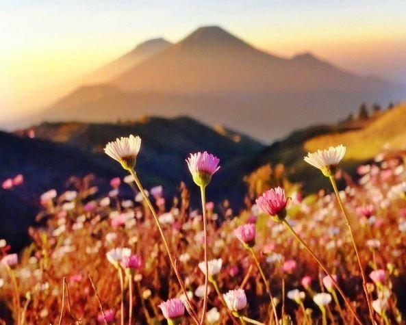 1. Gunung Prau, Dieng Plateau, Wonosobo, Jawa Tengah Disini kamu bakalan liat yang namanya Golden Sunrise yang indah banget. Dan juga, di lereng gunung ini ada bukit-bukit yang penuh rumput dan bunga indah seperti Bukit Teletubbies.