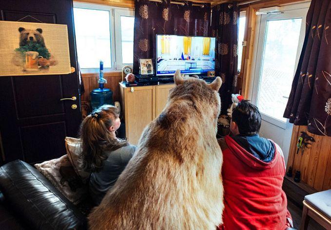 perkenalkan! cuman pasangan russian yang berani dan tangguh buat bikin beruang jinak sambil nonton tipi