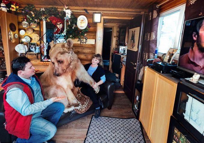 pasangan russia ini konon mengadopsi si beruang yang udah waktu otu yatim piatu..