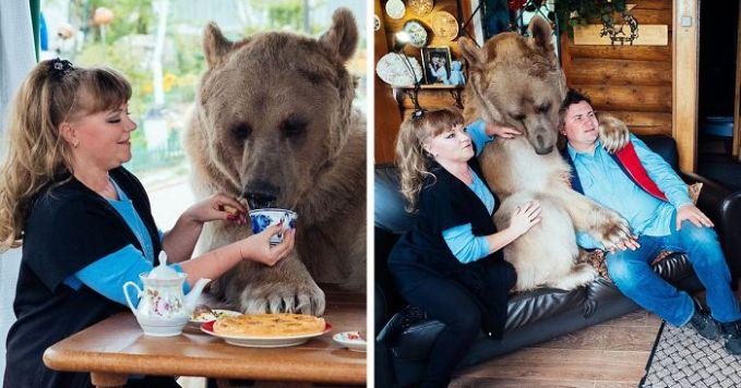 beruang dengan bobot ratusan kilo itu bahkan manja banget ya ama mereka