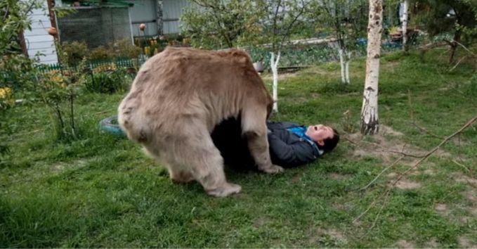tuh, jangan dikira si beruang lagi ngunyah perut si bapak, tapi lagi maen!
