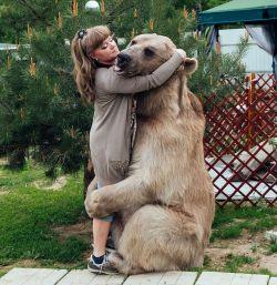 Begini Jadinya Kalo Manusia Berhasil Memelihara Beruang, WOW!