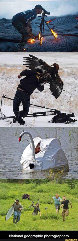 Aksi Kocak Para Fotografer Alam Liar Yang Sedang Mengambil Gambar!