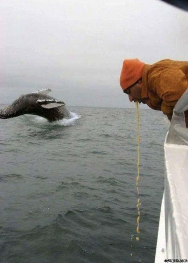 berada di kapal yang terombang ambing di laut emang bikin sebagian orang gak tahan mual yak.. masa ngeliat paus aja ampek muntah..