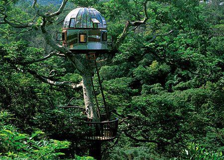 tuh, siapa sangka kalo di tengah hutan ada rumah pohon yang keren abis..