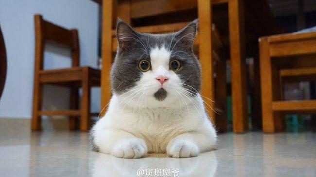 Nah Foto terakhir adalah Imutnya Seekor Kucing yang memiliki Motif Bulu dibagian Kepala Bawah seperti sebuah Jenggot Pendek, Kelihatan Gemesin banget!