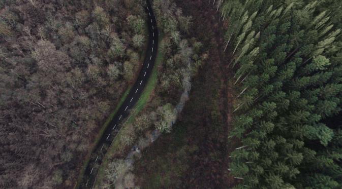 Pohon-pohon menjulang tinggi dan jalan kalau diliat dari atas kayak gini ya ternyata... Keren!