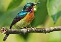 Kicauan Merdu 11 Burung Ini Akan Membuatmu Terpana. Check This Out!!!