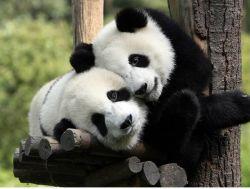 So Sweet! 21 Binatang-binatang Menggemaskan Ini Berpelukan!