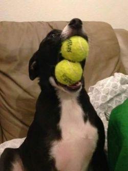 Deretan Foto Lucu dan Unik Anjing nan Menggemaskan