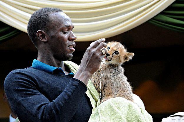 Bolt ga diragukan lagi adalah manusia tercepat di dunia, dia juga mengadopsi cheetah, hewan darat tercepat di dunia. Kembali pada tahun 2009 Bolt membayar $13,700 untuk mengadopsi bayi cheetah dari sebuah panti asuhan hewan di Kenya. Dia menamainya Lightning Bolt (petir), dan membayar $3.000 per tahun untuk perawatannya.