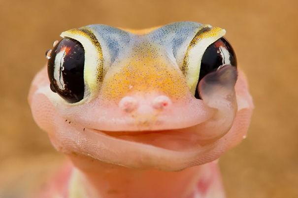 Kadal yang fotogenik! Lucu banget ya Pulsker senyumnya.