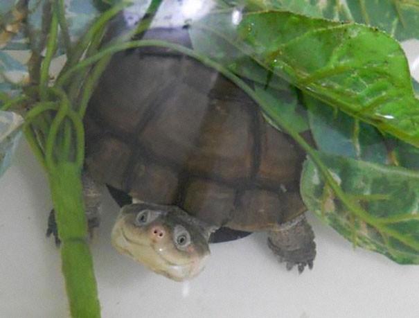 Kura-kura yang tersenyum, jarang nih!