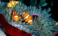 Ikan-Ikan Unik Penghuni Terumbu Karang