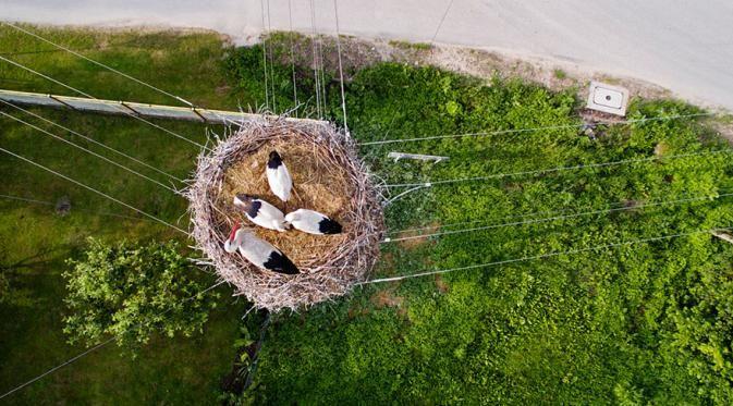 Sarang Burung di Polandia Pemandangan yang jarang banget kita lihat nih Pulsker. Induk burung dengan anak-anaknya masih dalam sangkar diatas tiang listrik. Terimakasih drone, sudang menyuguhkan foto manis ini.