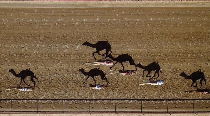 Al Marmoun Camel Racetrack, Dubai, Uni Emirat Arab Yang paling menarik dari foto ini adalah bayangan unta yang sangat nyata. Unta-unta ini berjalan berbarengan dipanasnya terik matahari. Keren banget kan??