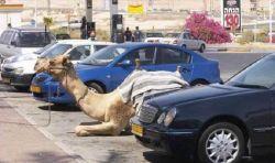 Mungkin 10 Hal Gila Ini Cuma Terjadi Di Dubai..WOW!!