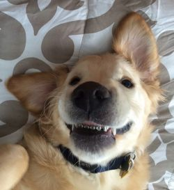 Ga Cuma Manusia, Anjing Ini Pake Behel Juga Loh Pulsker!
