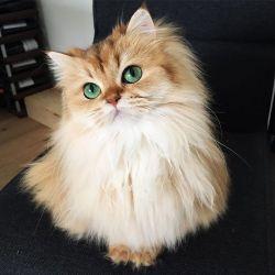 Kucing Ini Fotogenik dan Sadar Kamera Banget Loh Pulsker
