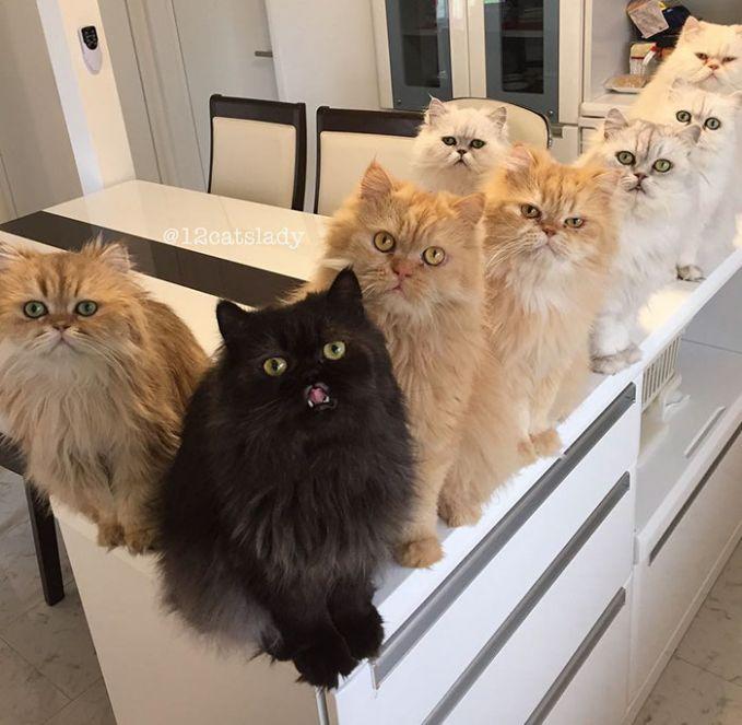 Saat ditanya kok bisa di foto ini semua kucingnya lihat ke kamera, ternyata dengan cara melambai-lambaikan mainan bulu kesukaan mereka dan memanggil nama kucing yang awalnya ga ngeliat.