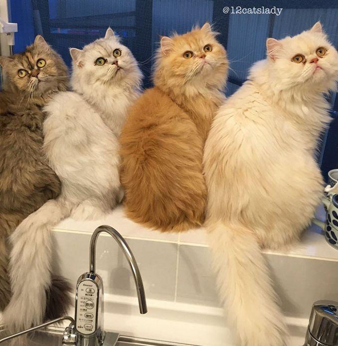 Ke-12 kucing ini sekarang sudah disterilkan jadi mereka ga akan beranak lagi, udah cukup banyak yaa 12 hehehe.