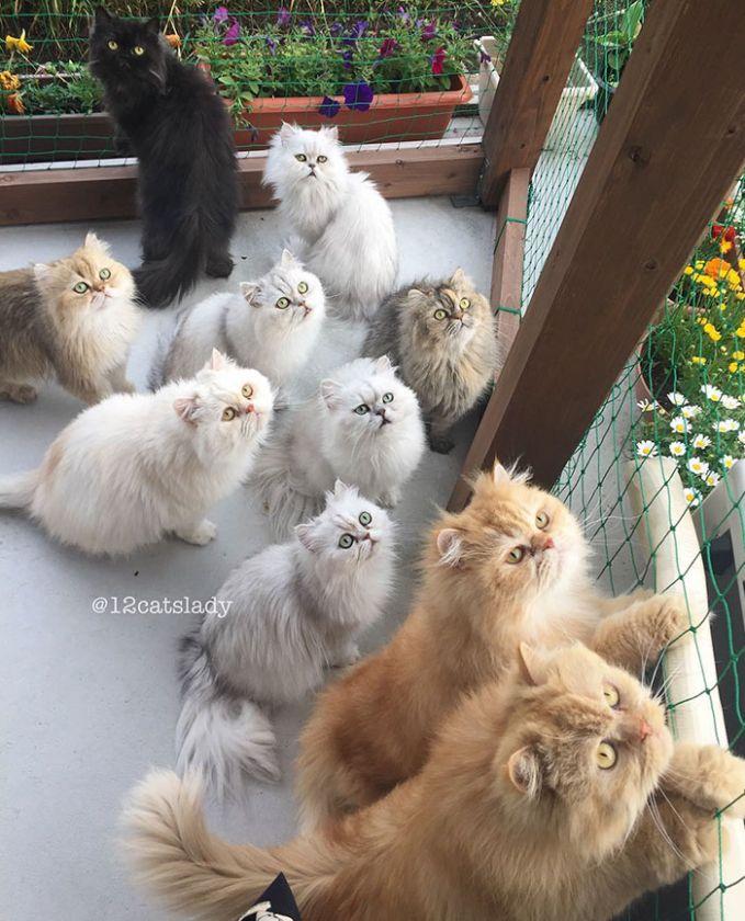 Nama ke-12 kucing-kucing ini adalah Shou, Karu, James, Yuki, Yuri, Ai, Bruce, Blackie, Momo, Kaya, Tiger, dan Goodie. Lucu-lucu yaa Pulsker, gemes! Yuk share ke keluarga dan temen kamu yang suka pelihara kucing.