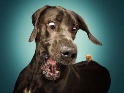 Ekspresi 10 Anjing yang Nangkep Makanan ini Kocak Banget!