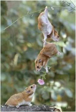 10 Foto Persahabatan Antar Hewan yang Bikin Takjub