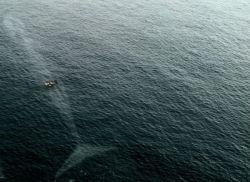 7 Foto yang Akan Membuat Kalian Berpikir Dua Kali Untuk Berenang Disini