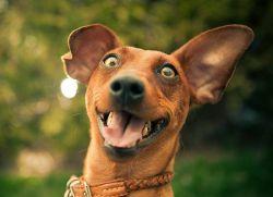 8 Ekspresi Hewan Saat Tersenyum, Lucu Sekaligus Gemesin