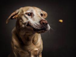 7 Ekspresi Lucu Anjing Saat Hendak Menangkap Mangsanya