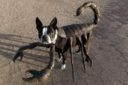 9 Dandanan Anjing yang Paling Nyeleneh dan Anti Mainstream di Dunia