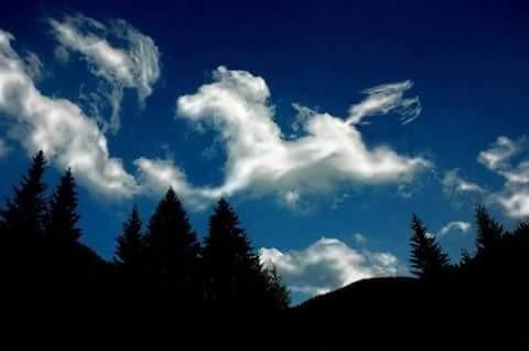 Hal yang sama juga ditunjukkan oleh foto ini nih pulsker. Kali ini salah seorang netizen berhasil menangkap sosok penampakan awan yang mirip seekor kuda yang sedang terbang di angkasa ini. Konon, bagi sebagian masyarakat ada yang meyakini jika penampakan awan tersebut adalah jelmaan dewa pulsker. Tapi itu tergantung kepercayaan masing-masing individunya ya.