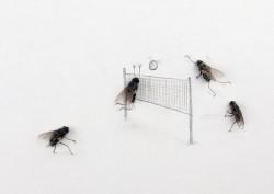 9 Foto Ketika Lalat Mati Menjadi Sebuah Karya Seni yang Lucu dan Unik