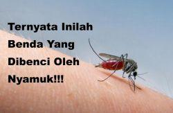 Ternyata Inilah Benda Yang Dibenci Oleh Nyamuk