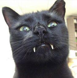 Kucing Ini Titisan Vampir, Ah Masa Sih?