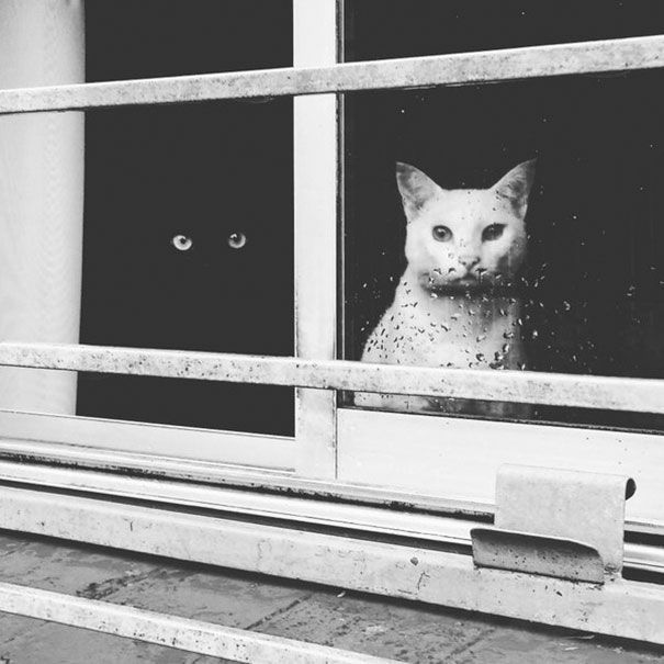 9 Foto Kucing Yin dan Yang Ini Gemesin Banget!