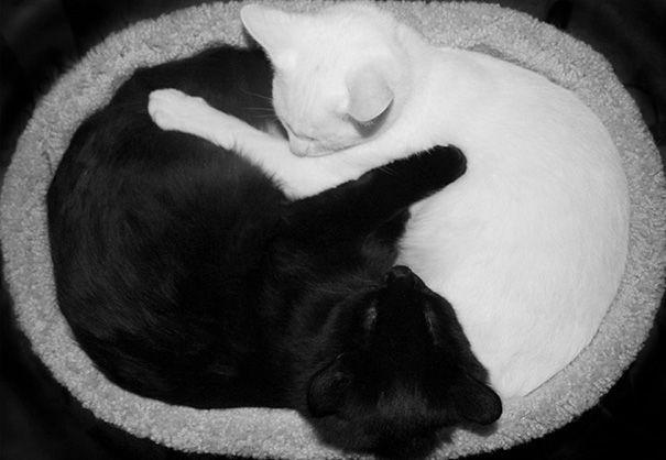 Hmm ngegemesin banget ya Pulsker. Yuk share ke saudara dan temen kamu yang suka banget sama kucing.