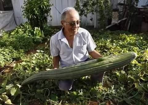 Pas mau nengokin kebun tiba-tiba si kakek ini terkejut melihat sesuatu yang tidak biasa pulsker. Eh, pas diselidiki ternyata ada sayur yang tumbuh besar di kebunnya, langsung deh gembira hati si kakek.