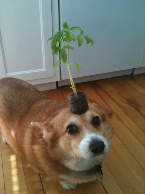 Eh..ada tanaman tumbuh diatas kepala anjing ini. Lucu ya Pulsker.