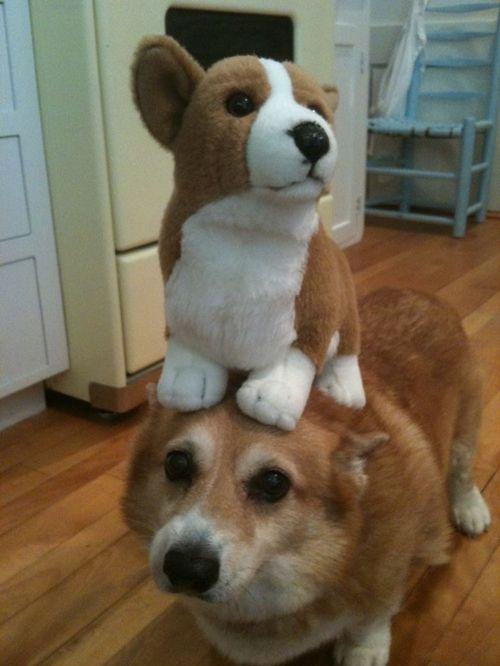 Anjing diatas anjing.