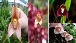 9 Keindahan Bunga yang Menakjubkan dan Belum Pernah Kalian Lihat Sebelumnya