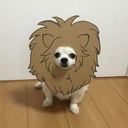Cosplay Anjing dari Kardus yang Murah Meriah Tapi Gak Kalah Lucu