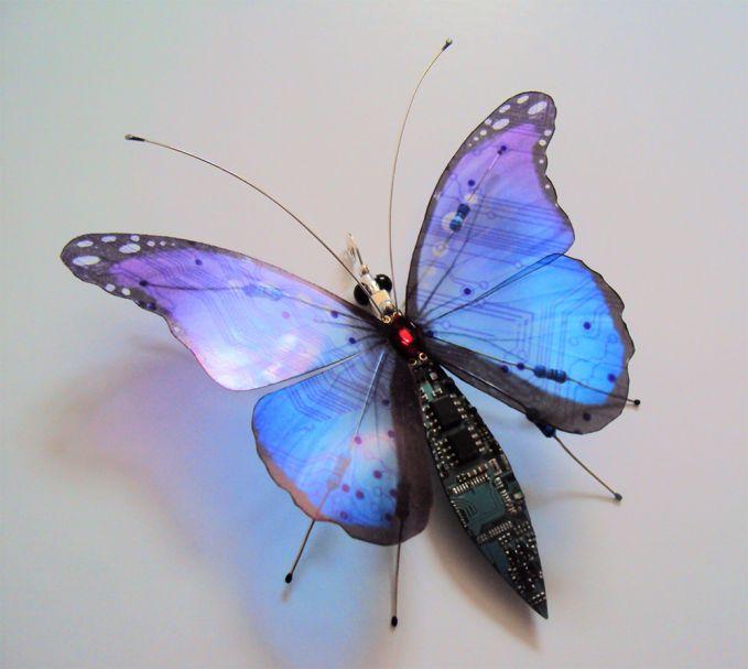 Atau kupu-kupu dengan sayap berwarna biru dan sedikit warna hitam ini nih. Tidak cuma itu saja, badan dari kupu-kupu disesuaikan dengan memberi sedikit sentuhan warna hitam agar makin terlihat klop.